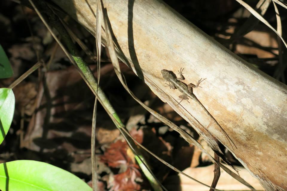 anhinga-trail-larevue1