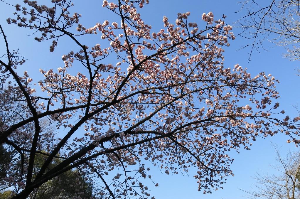 tokyo-Ueno-larevuey-2